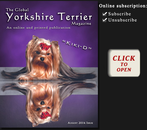 The Global Yorkshire Terrier Magazine - September 2013